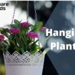 Indoor Hanging Plants to Decorate Home