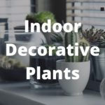 Amazing Indoor Decorative Plants Ideas for your Home