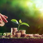 Money-Plant-Vastu