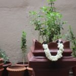 Importance of Tulsi plant in Vastu Shastra